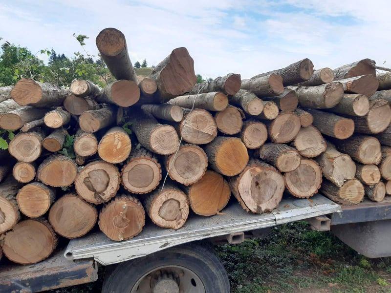 Над 200 куб. м. дървесина задържаха горските служители на РДГ-Бургас