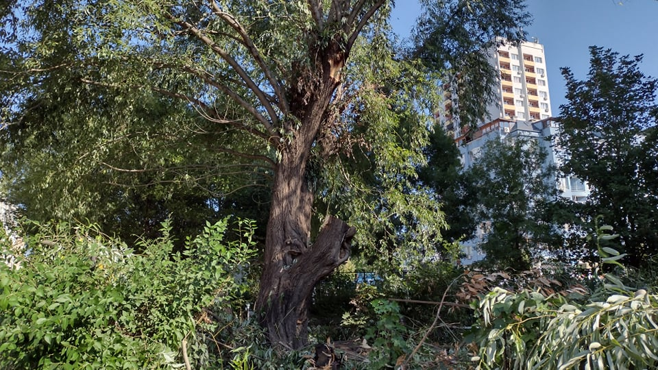 Паднали дървета и клони след снощната буря в Бургас