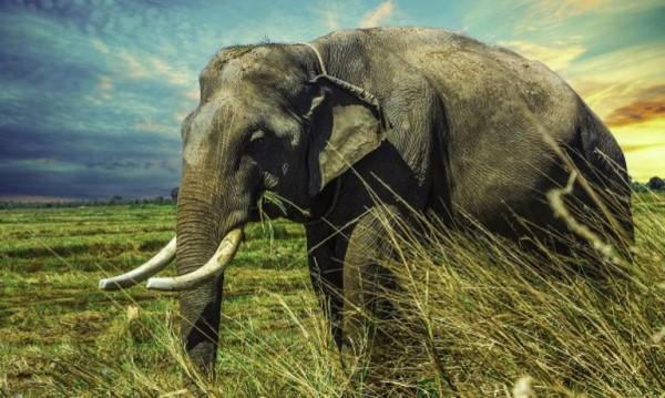 Стотици слонове умират загадъчно в Ботсвана