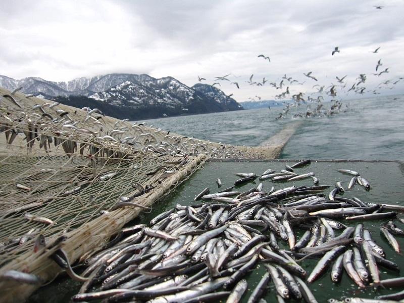 България е начело на насърчаването на устойчив риболов в Черно море
