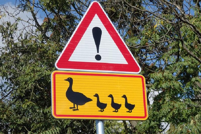 Пътен знак пази птици по пътя