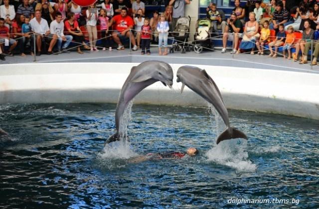 Протест във Варна: Природозащитници искат да се закрие делфинариума
