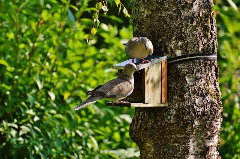 ГЕРБ-Бургас ще постави хранилки за птици по случай Световния ден на Земята