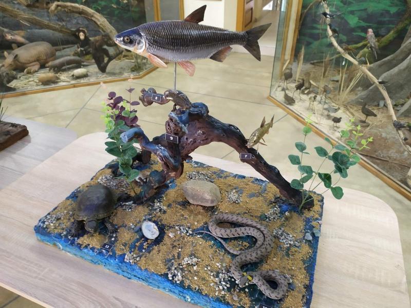 Изложба в Бургас показва природата на река Марица