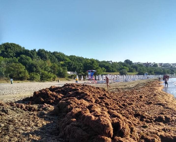 Морето изхвърля водорасли край Сарафово, работници ги трупали в свободната зона на плажа