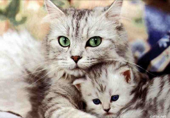 Новозеландски град забранява домашните котки