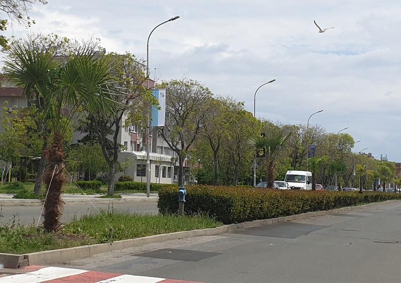 Палми в центъра на Поморие