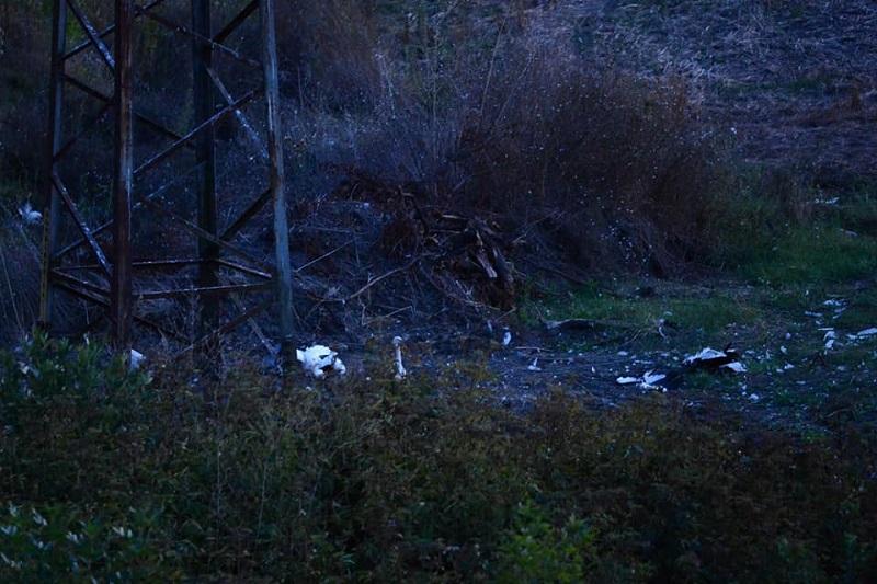 """РИОСВ Бургас и """"Електроразпределение юг"""" ЕАД предприеха спешни мерки за мъртви щъркели"""