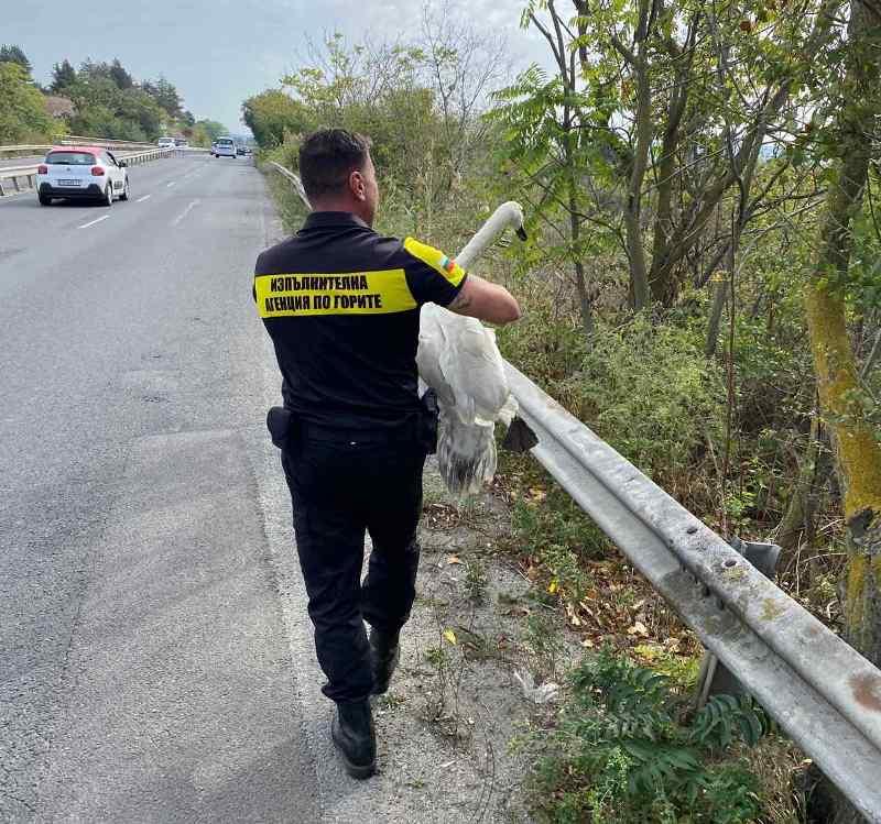 Горски инспектори спасиха ням лебед