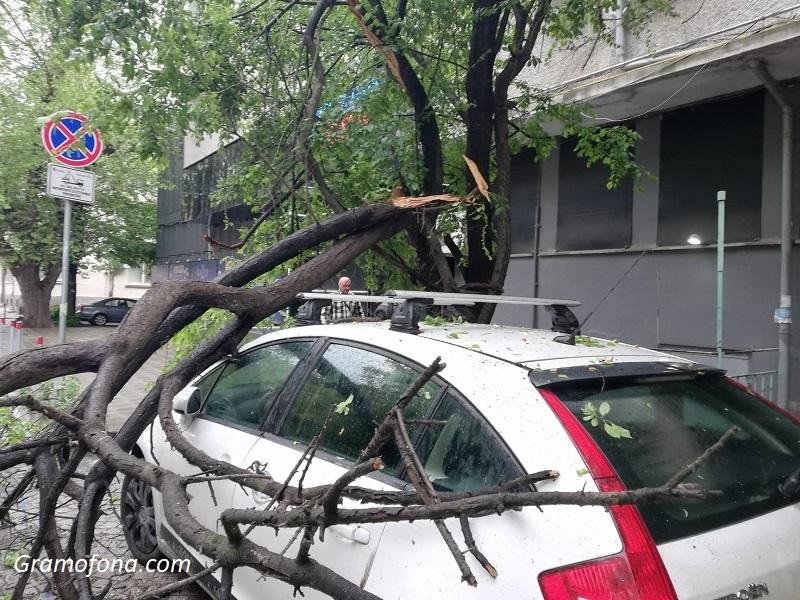 Огромен клон падна върху автомобил