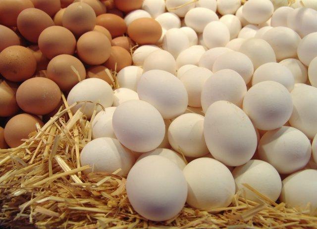 Бургазлии да са спокойни – няма яйца и прах с фипронил