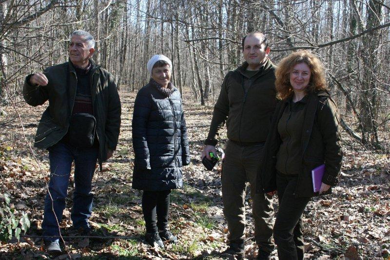 Вековни дъбове в Странджа стават защитени
