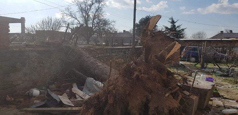 Десетки паднали дървета и материални щети след снощната буря в Сунгурларе