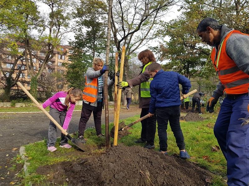 """Засаждат 34 дървета в """"Лазур"""" и """"Братя Миладинови"""""""