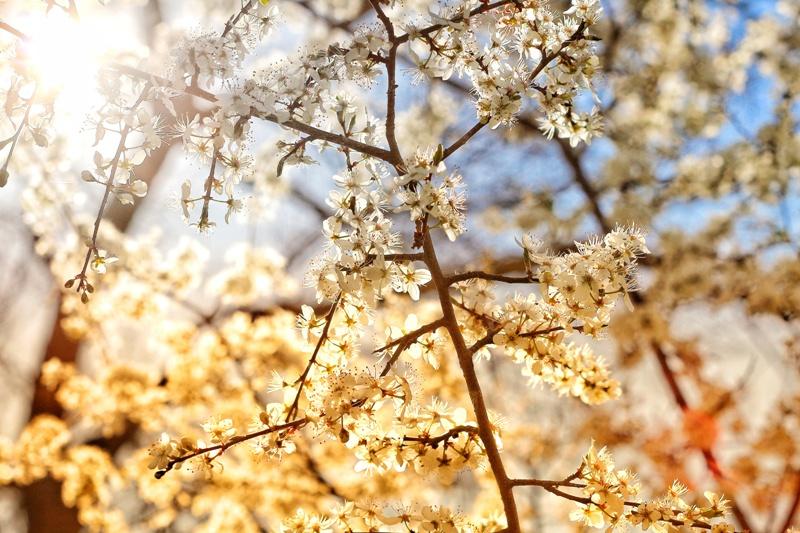 "Пролет в ЗМ ""Корията"""