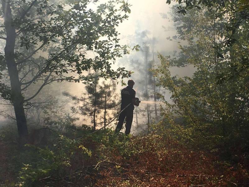 70 декара гора изгоря при пожара в ДГС-Айтос