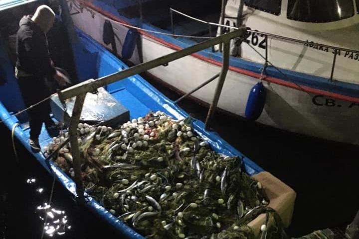 Едър паламуд напълни мрежите на ахтополските рибари