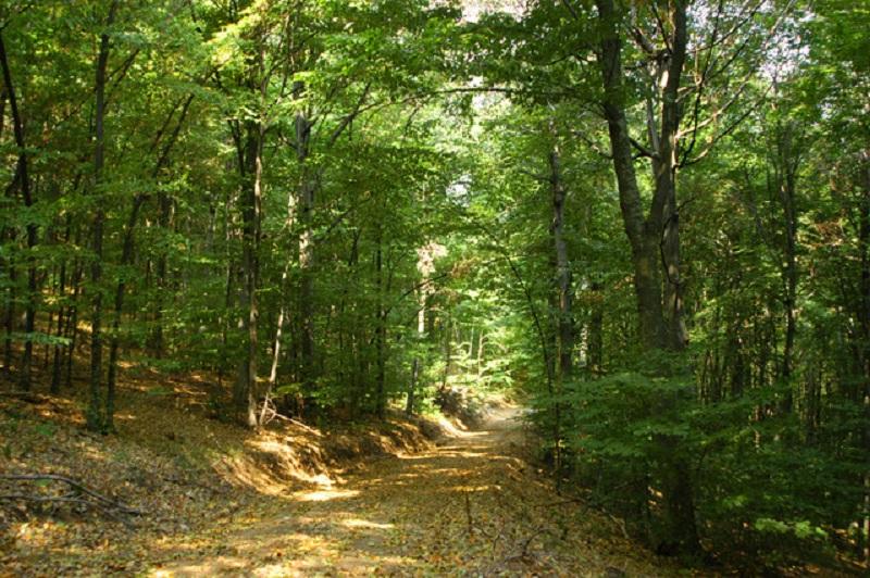 3- годишно дете изчезна в гората