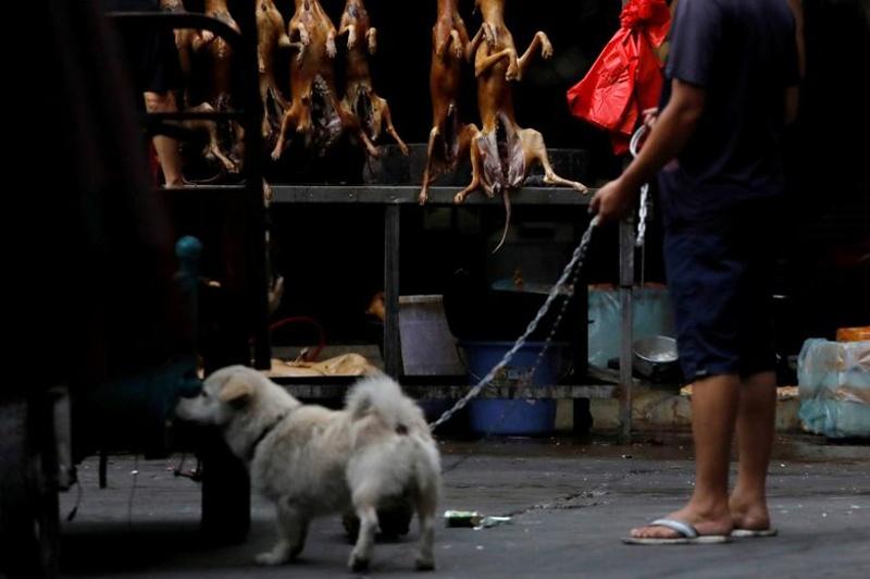 Китайци забраниха продажбата и яденето на диви животни