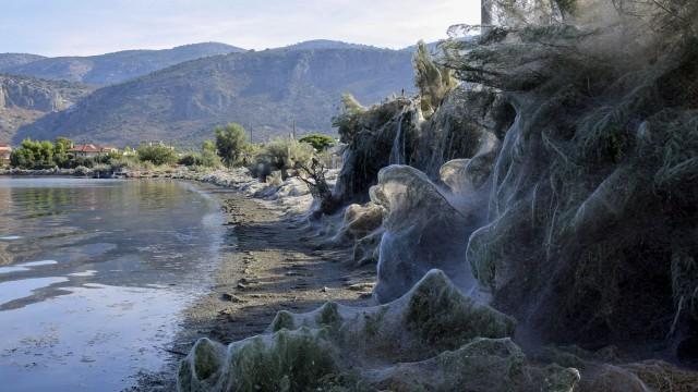 Огромни паяци обвиха гръцки плаж в паяжини