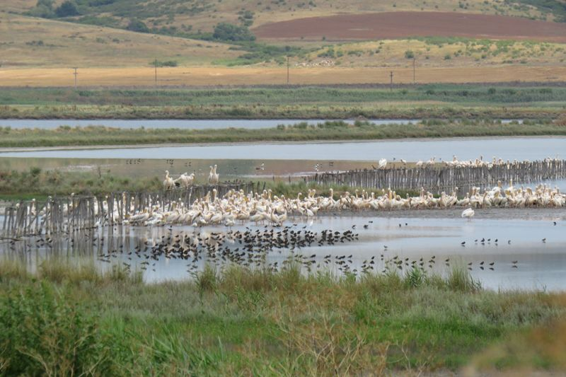 Гнездовият сезон на Атанасовско езеро силно закъснява