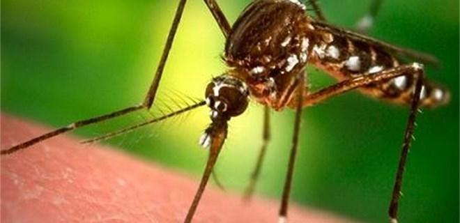 С топъл аерозол опушват против комари, вижте графика