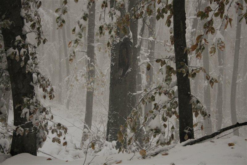 Снежна приказка в природен парк Странджа