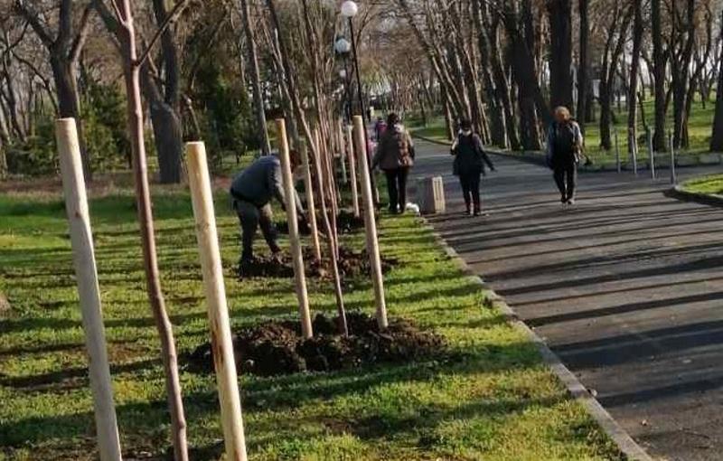 1634 дървета са засадени в Бургас от ноември до днес