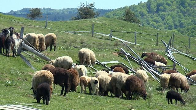 Отлагат планираната за днес евтаназия на животни