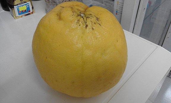 Лимон-гигант в Писменово