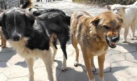 Бездомно куче нахапа дете в Хасково