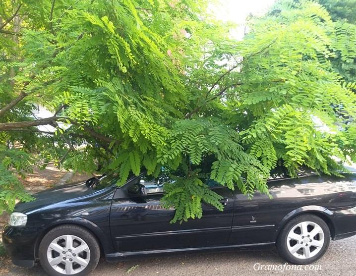 Дърво се счупи и падна върху колата на бургазлия