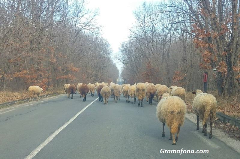 Важно за пропускателния режим за земеделските стопани и животновъдите