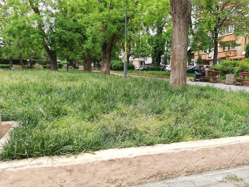 Майки питат: Кога ще се окоси тревата в Борисовата градинка?